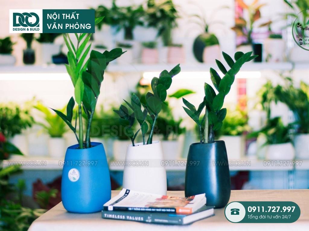 TOP 10 loại cây cảnh văn phòng dễ trồng